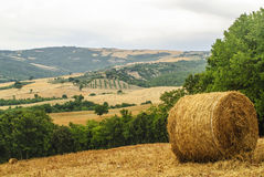Landscape in Tuscany at summer Stock Image