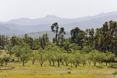 Landscape nearby Oletta, Nebbio region, Corsica, France Stock Photos