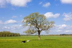 Landscape, Netherlands stock photos