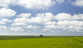 Landscape from the Netherlands Stock Photos