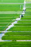 Landscape of the Netherlands Royalty Free Stock Image
