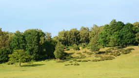 Landscape of the New Forest Stock Photo