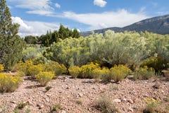 Landscape in New Mexico. A semi arid region in New Mexico, USA stock photos