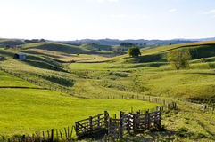 Landscape in New Zealand Stock Photos
