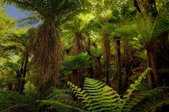 Landscape New Zealand - primeval green forest in New Zealand Stock Image