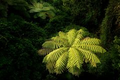 Landscape New Zealand - primeval green forest in New Zealand Royalty Free Stock Image