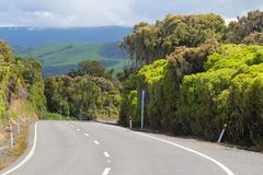 A road in the forest, The Catlins, South Island, New Zealand. Landscape of New Zealand. A road in the forest, The Catlins, South Island, New Zealand stock photography