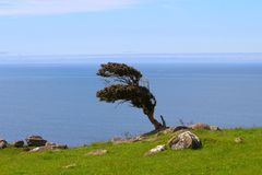 A lonely tree, The Catlins, South Island, New Zealand. Landscape of New Zealand. A tree, The Catlins, South Island, New Zealand stock photography