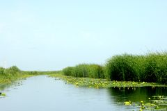 Landscape and nice yellow water lilies in Danube Delta channel. Landscape in the Delta in midsummer. Pearl of the province of Dobrogea, the mouth of the Danube stock photography