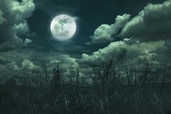 Landscape of night sky with clouds. Beautiful bright full moon above wilderness area in forest, serenity nature background. Outdoors at nighttime. The moon royalty free stock photos