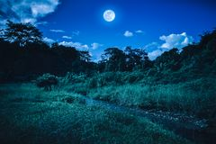 Bright full moon above wilderness area in forest, serenity natur. Landscape of night sky with clouds. Beautiful bright full moon above wilderness area in forest Royalty Free Stock Photography