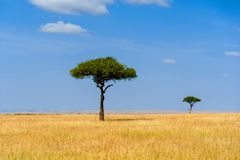 Landscape with nobody tree in Africa. Beautiful landscape with nobody tree in Africa stock photography