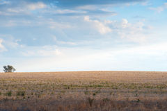 Landscape north of Canberra, Australia. This image shows the Landscape north of Canberra, Australia royalty free stock images