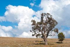Landscape north of Canberra, Australia royalty free stock images