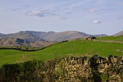 Landscape in north England. Hilly landscape with sheep pastures in Cumbria, northern England Stock Photography
