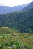 Landscape of North Vietnam. Forests and mountains of North Vietnam stock photography