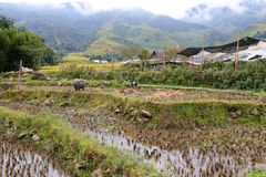 Landscape in the North of Vietnam Royalty Free Stock Photo