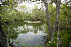 Landscape: Northeastern U.S. Pond with Lily Pads in Spring Royalty Free Stock Photo