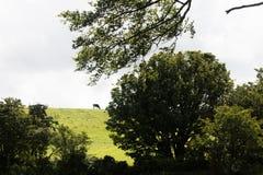 Landscape, Northern Ireland Stock Photography
