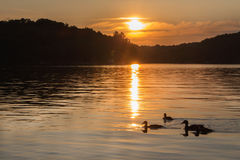 Landscape of a northern lake at sunset with ducks. Swimming Royalty Free Stock Images