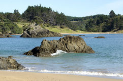 Landscape of Northland New Zealand. Stock Images