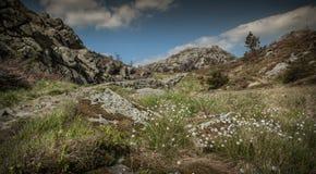 Landscape 20 Stock Image