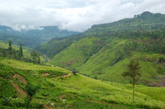 The landscape of Nuwara Eliya Stock Photography