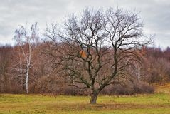 Landscape with oak and bare forest in late autumn stock images