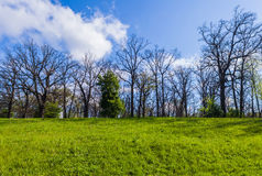 Landscape of oak forest royalty free stock photos