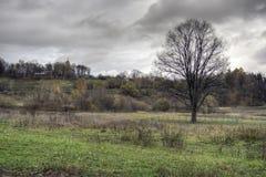 Landscape oak tree royalty free stock photos