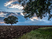 Landscape of an oak Royalty Free Stock Images