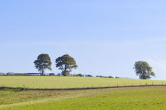Landscape with oak trees Stock Image