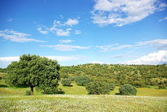 Landscape of oak trees at Portugal. Stock Images