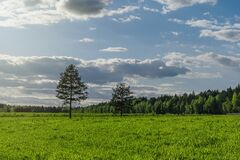Free Landscape Of A Huge Field With Evenly Trimmed Grass Royalty Free Stock Photo - 184142155