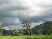 Landscape Of Africa (Tanzania)