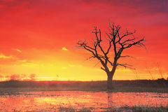 Free Landscape Of An Old Tree Against A Red Hot Sunset Sun. Royalty Free Stock Image - 91339576