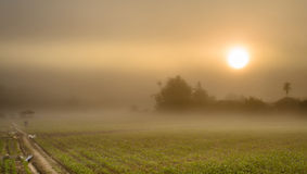 Free Landscape Of Corn Farming Field And Sunrise In The Mist Royalty Free Stock Photography - 45600617