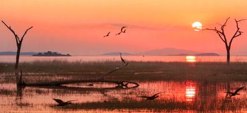 Landscape Of Lake Kariba With A Bright Orange Sunset Sky With Egyptian Geese And A Silhouette Of A Heron, Zimbabwe Royalty Free Stock Photography