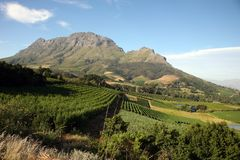 Landscape Of The Wineries Royalty Free Stock Photography
