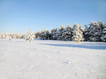 Free Landscape Of Winter Royalty Free Stock Photo - 7653805