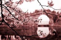 Free Landscape Of Yuantouzhu Royalty Free Stock Image - 94722116