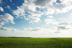 Landscape og green corn feld. With beautiful sky Royalty Free Stock Photos