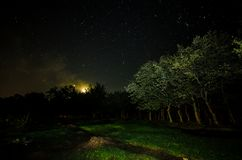 Landscape oh night forest with green meadow in bright starry night or view of milky way in the. Woodland royalty free stock images