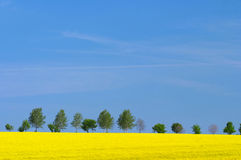 Landscape with oilseed rape Stock Photo