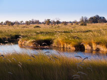 Landscape at Okavango river royalty free stock photography
