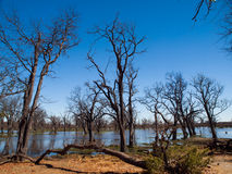 Landscape at Okavango river Royalty Free Stock Images