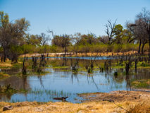 Landscape at Okavango river Stock Images