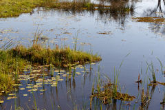 Landscape in the Okavango swamps Royalty Free Stock Images