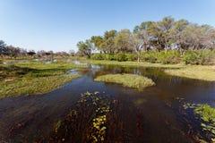 Landscape in the Okavango swamps Stock Photography