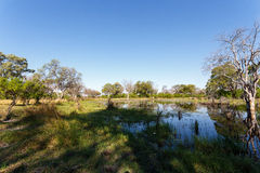 Landscape in the Okavango swamps Royalty Free Stock Photography
